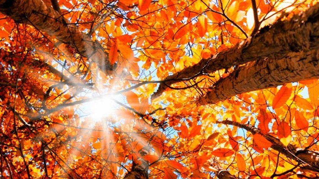 Топлоизолациите през месец Септември започнаха